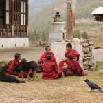 Moinillons dans le monastère de TAMSHING partageant leur repas avec chiens et corbeaux