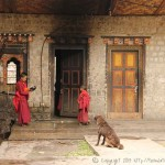 Moinillons dans le monastère de TAMSHING
