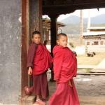 Moinillons à l'entrée du monastère de TAMSHING
