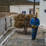 Tholaria : L'âne est le meilleur moyen de déplacement dans les ruelles étroites
