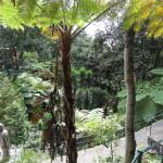 le jardin tropical 2