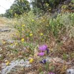 Sentier pavé de marches bordé de fleurs