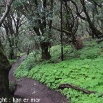 Dans le Parque National de Garajonay
