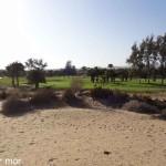 Golf vert et désert
