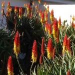 fleurs a Llanos la palma