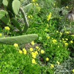 fleurs aux feuilles de trèfle