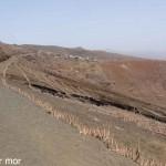 Chemin bordé d'aloe verde, Hortalao