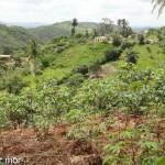 Brasil : village quilombo