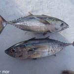 Chic ! du poisson frais