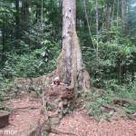 Drôles de racines