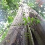 Fromager en forêt
