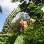 Palmier et hibiscus