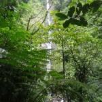 Chute-moreau-à-travers-la-végétation