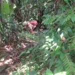Monts-des-caraïbes-trace-abrupte-et-moustiqueuse