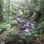 Riviere-mangle