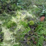Végétation-au-sommet