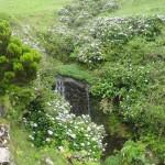 Chute d'eau au milieu des hortensias