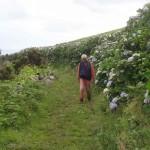 Sentier d'hortensias